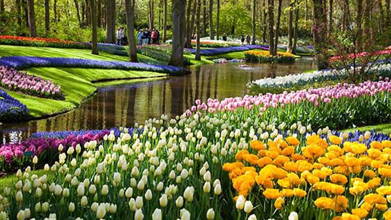 Britains floral /& garden collection jardin salon multi-annonce